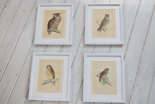 Load image into Gallery viewer, Antique Set Hand Coloured Owl Prints Framed