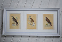 Load image into Gallery viewer, Antique Framed Set of Three Buzzard Prints