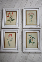 Load image into Gallery viewer, Vintage botanical Print Set in Shabby Chic Frames