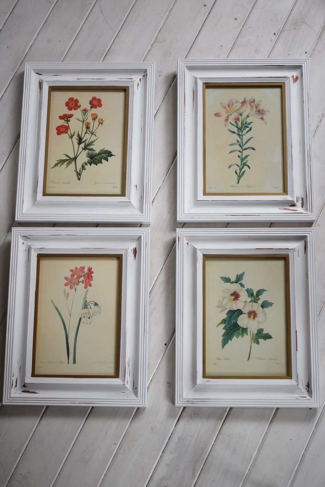 Vintage botanical Print Set in Shabby Chic Frames