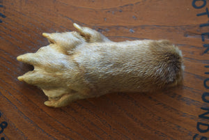 taxidermy otter paw mounted on to oak shield