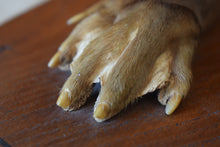 Load image into Gallery viewer, taxidermy otter paw mounted on to oak shield