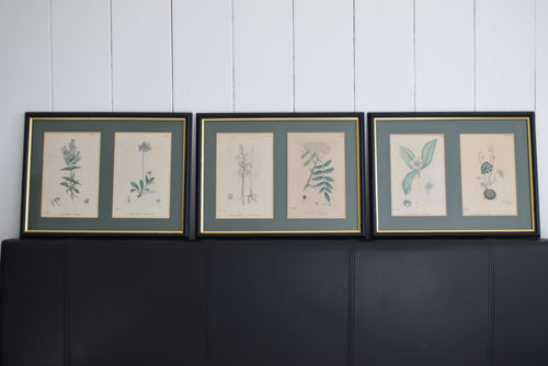 Antique Hand Coloured Framed Botanical Prints