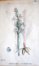 Load image into Gallery viewer, Antique Hand Coloured Framed Botanical Prints