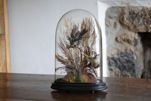 Victorian Taxidermy Birds in Glass Dome