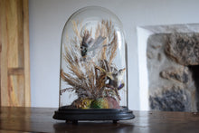 Load image into Gallery viewer, Victorian Taxidermy Birds in Glass Dome