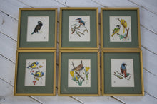 Load image into Gallery viewer, Vintage British Bird Watercolour Paintings