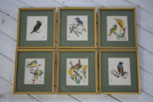 Vintage British Bird Watercolour Paintings