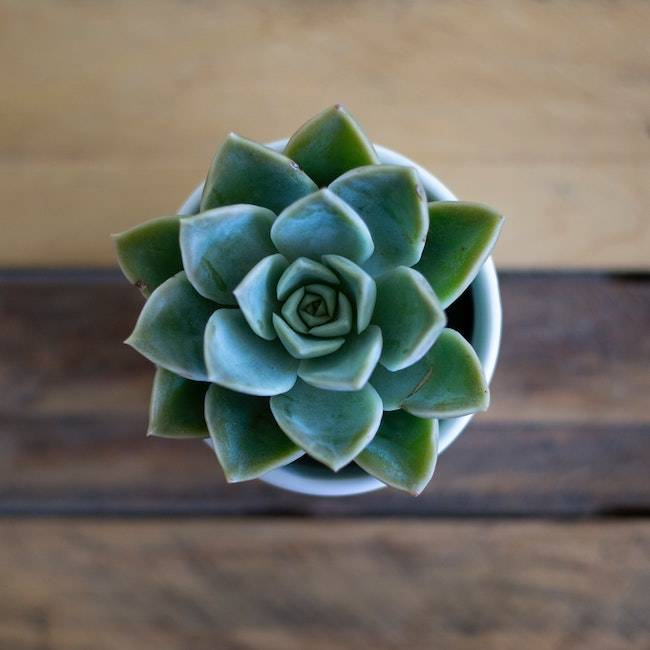 Peaceful Succulent | Get the look with Jolie products
