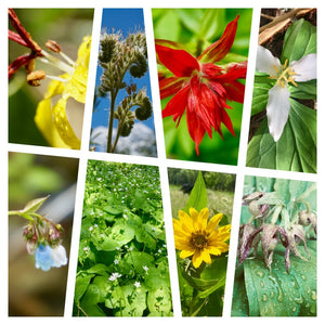 Card Set: Native Plants of the Inland Northwest (Horizontal Edition)