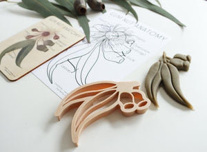 Gumnut Wooden Anatomy Tile + Colouring in Card