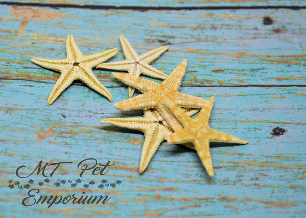 Mini Starfish - Hermit Crab Food