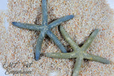 Blue Philippine Starfish MULTIPLE SIZES