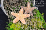 Jungle Starfish - Hermit Crab Food, Home Decor