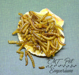 Mealworms - Hermit Crab Food