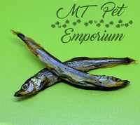 Capelin Whole Fish - Hermit Crab Food
