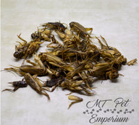 Crickets Whole - Hermit Crab Food