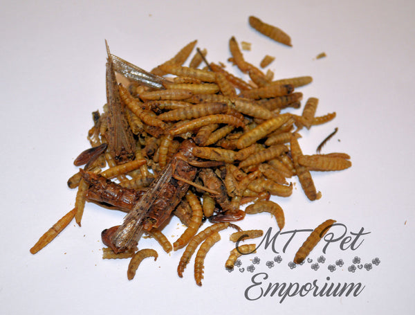 Insect Trail Mix - Hermit Crab Food, Fish Food, Chicken Snack