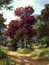 Johnnie Liliedahl: Basic Landscape Painting - Forked Path Bundle