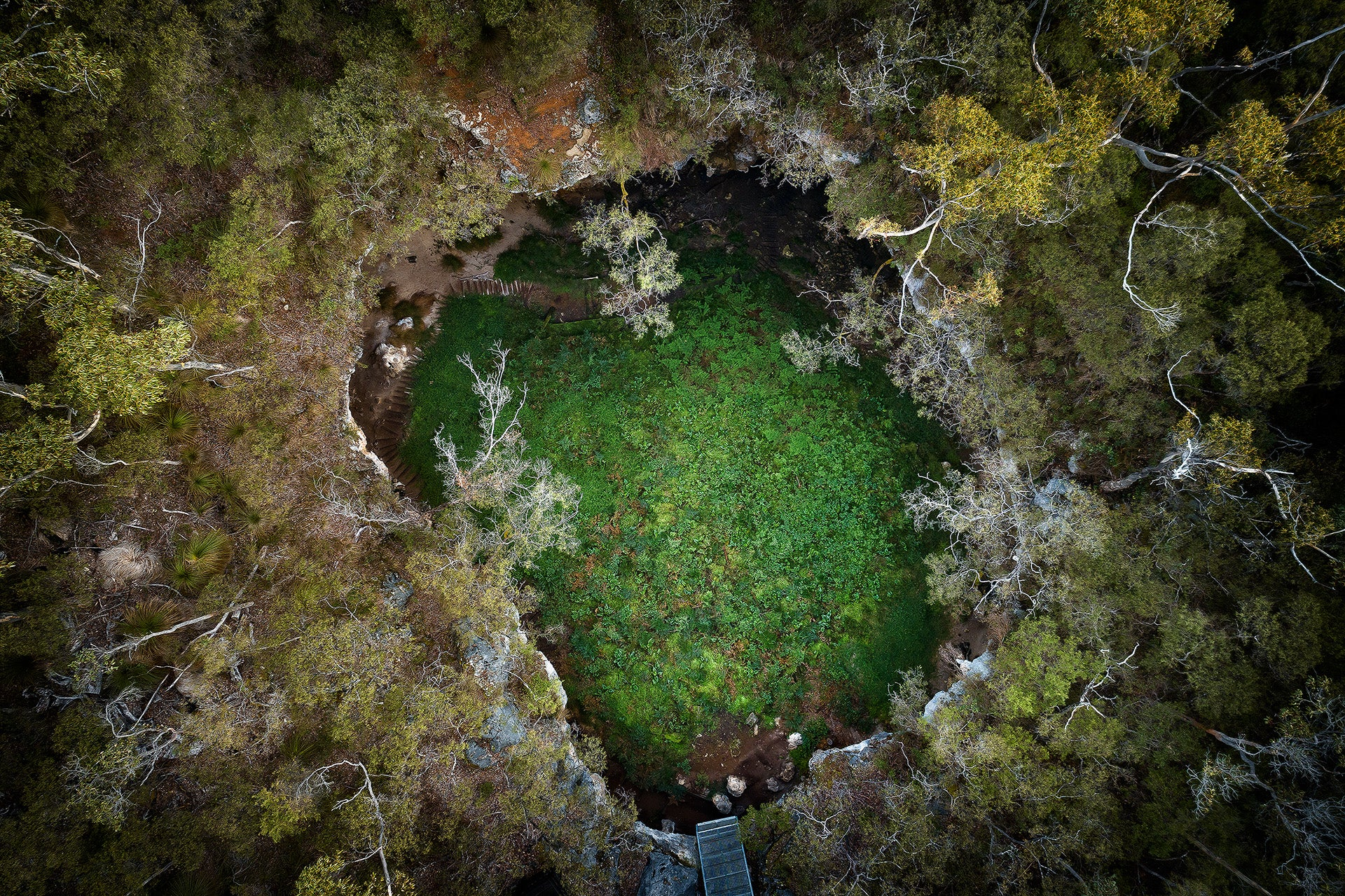Limestone sink hole in the Margaret River region South Western Australia.  Green forest karri trees caves that you abseil into.