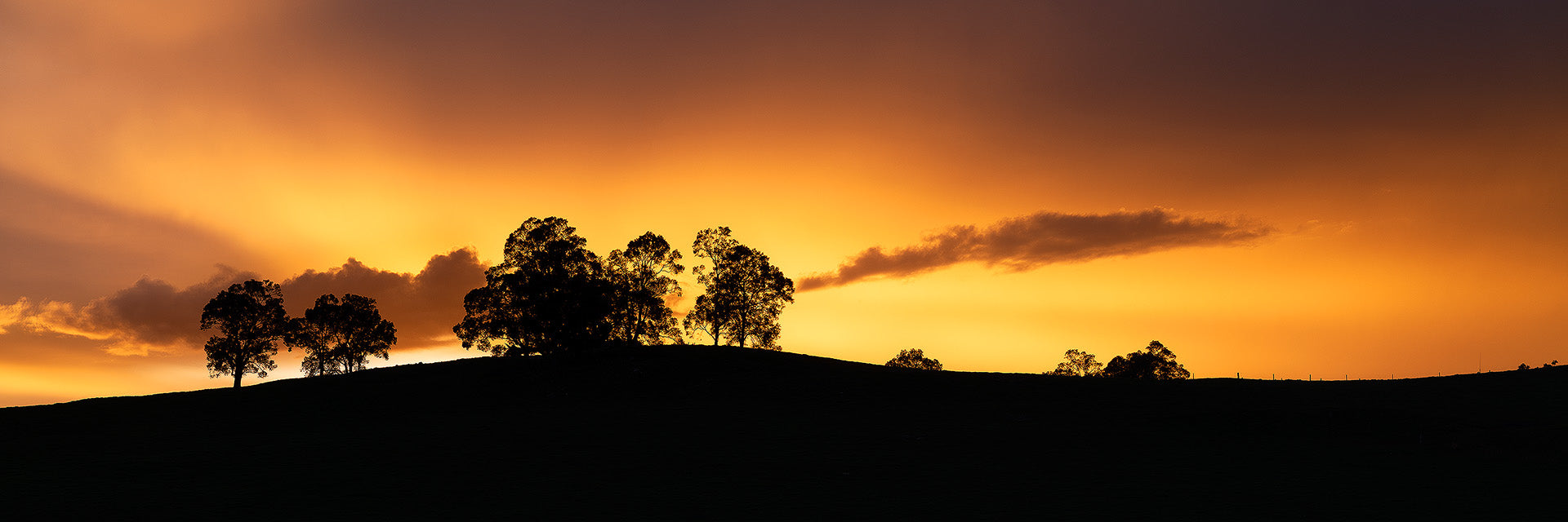 photography silhouette of sunrise with trees and rolling hills in the Donnybrook region of Western Australia.