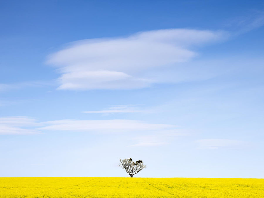 Canola Field, Albany, Western Australia | Christian Fletcher Photo Images | Landscape Photography Australia