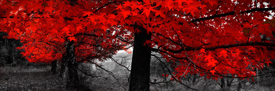 Red Tree, Bogong, Victoria | Christian Fletcher Photo Images | Landscape Photography Australia
