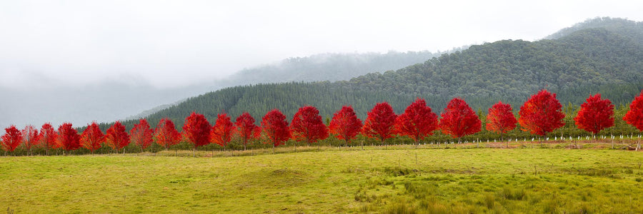 Autumn Trees, Bright, Victoria, Australia | Christian Fletcher Photo Images | Landscape Photography Australia