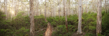 Boranup Forest, Margaret River, South Western Australia | Christian Fletcher Photo Images | Landscape Photography Australia