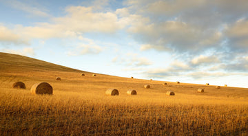 Farmland, Bridgetown, South Western Australia | Christian Fletcher Photo Images | Landscape Photography Australia