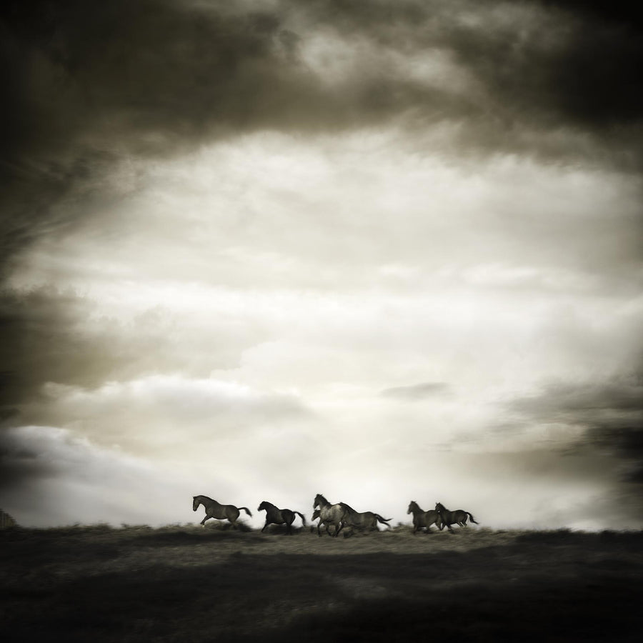 Horses, Sandalford Winery, Margaret River, Western Australia - Christian Fletcher Gallery