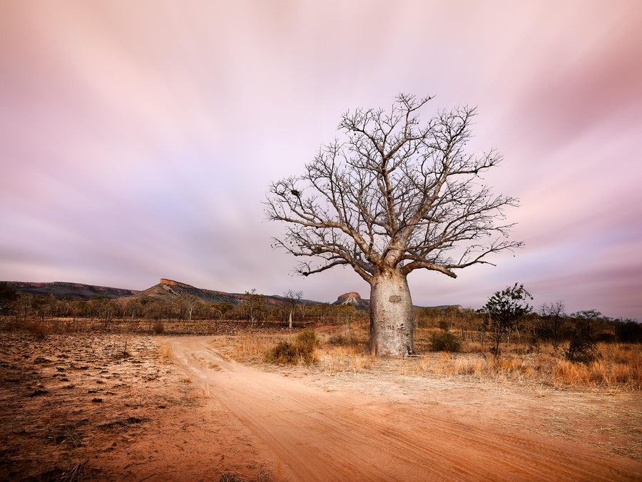 Boab Tree, Kimberley, North Western Australia | Christian Fletcher Photo Images | Landscape Photography Australia
