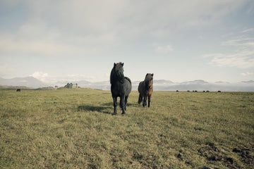Horses, Iceland | Christian Fletcher Photo Images | Landscape Photography Australia