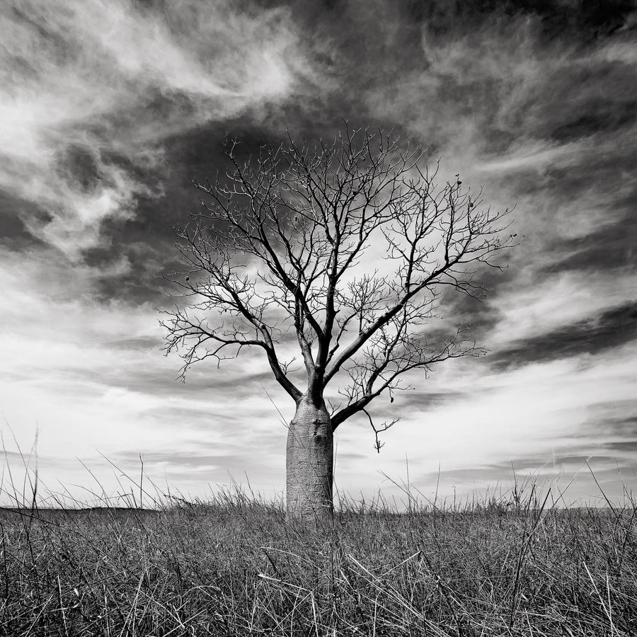 Boab Tree, Kununurra, North Western Australia | Christian Fletcher Photo Images | Landscape Photography Australia