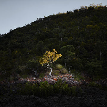 Tree, North Western Australia | Christian Fletcher Photo Images | Landscape Photography Australia