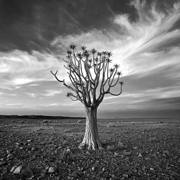 Quiver Tree, Fish River Canyon, Namibia, Africa - Christian Fletcher Gallery