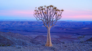 Fish River Canyon, Namibia, Africa | Christian Fletcher Photo Images | Landscape Photography Australia