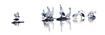 Pelicans | Christian Fletcher Photo Images | Landscape Photography Australia