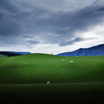 Farmland, Wanaka, South Island, New Zealand | Christian Fletcher Photo Images | Landscape Photography Australia
