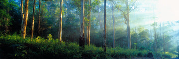 Karri Forest, Pemberton, South Western Australia | Christian Fletcher Photo Images | Landscape Photography Australia