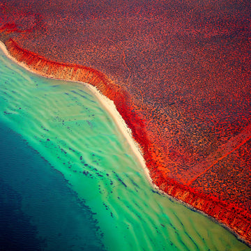 Shark Bay, North Western Australia - Christian Fletcher Gallery