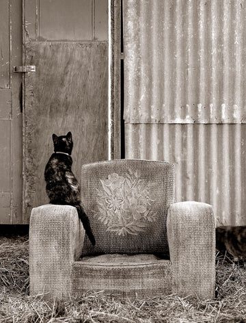 Spiffy, The Cat | Christian Fletcher Photo Images | Landscape Photography Australia