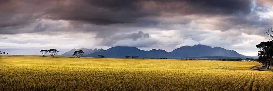 Canola, Stirling Ranges, Western Australia | Christian Fletcher Photo Images | Landscape Photography Australia