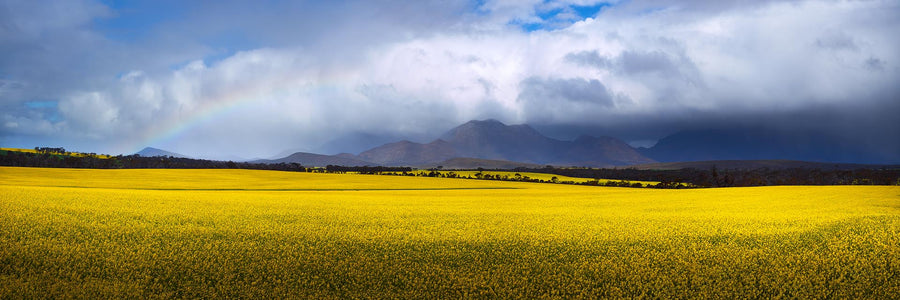 Canola Fields, South Western Australia | Christian Fletcher Photo Images | Landscape Photography Australia