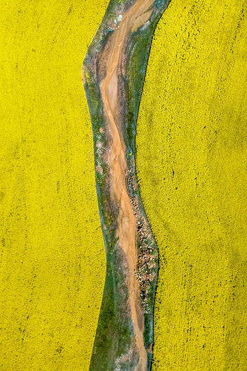 The yellow canola fields around York, Mid Western Australia.  Abstract aerial photography by Christian Fletcher