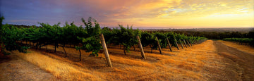Yungarra Estate Vineyard, Dunsborough, South Western Australia | Christian Fletcher Photo Images | Landscape Photography Australia
