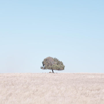 Farmland, Mid West, Western Australia | Christian Fletcher Photo Images | Landscape Photography Australia