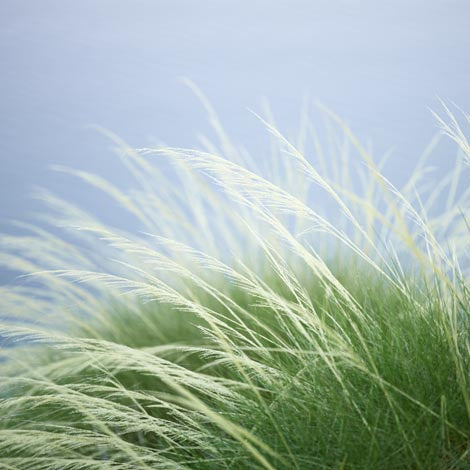 Cushion Cover - Grass, North Western Australia | Christian Fletcher Photo Images | Landscape Photography Australia