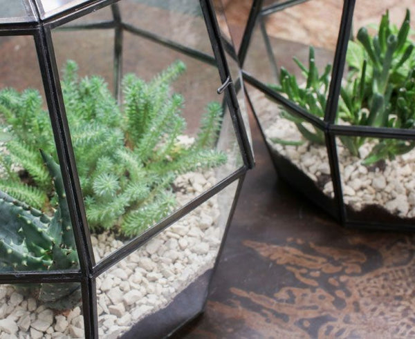 small indoor greenhouses with plants inside