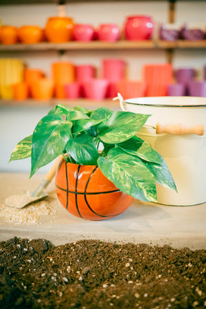Basketball Plant Kit